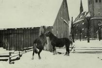 Pferde der Familie Viedenz (Franzes)
